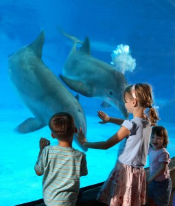 Dolphin Discovery at the National Aquarium | Courtesy of the National Aquarium